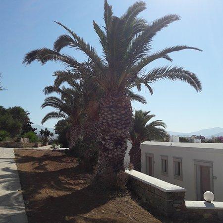Агиос-Прокопиос, Греция: palme
