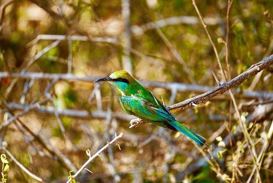 Tissamaharama, Sri Lanka: photo7.jpg