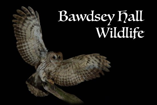 Bawdsey, UK: Excellent opportunities for Owl photography.