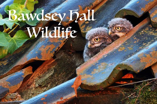 Bawdsey, UK: Little Owls are one of the Private Nature Reserves residents.