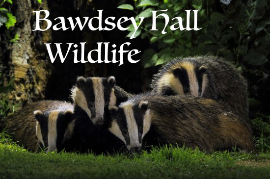 Bawdsey, UK: A fantastic place for Badger watching. Watch these from the comfort of your bedroom window.