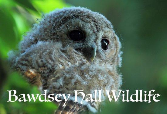 Bawdsey, UK: Get close to Wildlife.