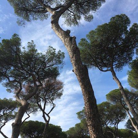 Photo of Villa Doria Pamphilj in Rome, , IT