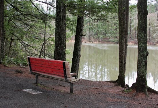 Camas, WA: A bench along the Round Lake Loop.