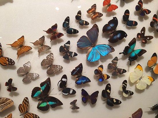 Butterfly World: photo2.jpg