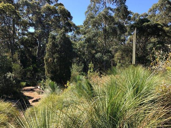 Wollongong botanic garden australia top tips before you for Gardening 101 australia