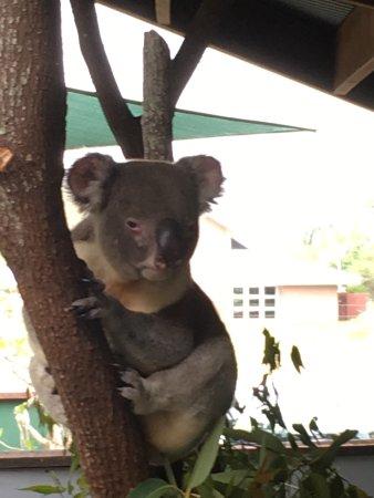 Wildlife Habitat Port Douglas: photo1.jpg