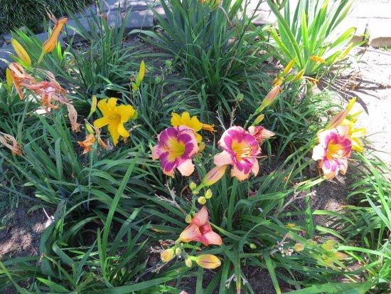 Somers Garden : flowers
