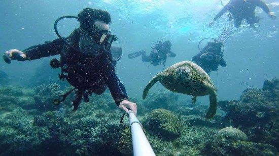 Semporna, Malaysia: my friend's selfie with Mr Turtle