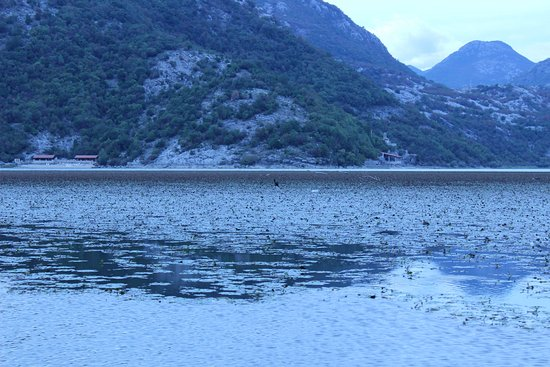 Tivat Municipality, Μαυροβούνιο: Scadar lake.