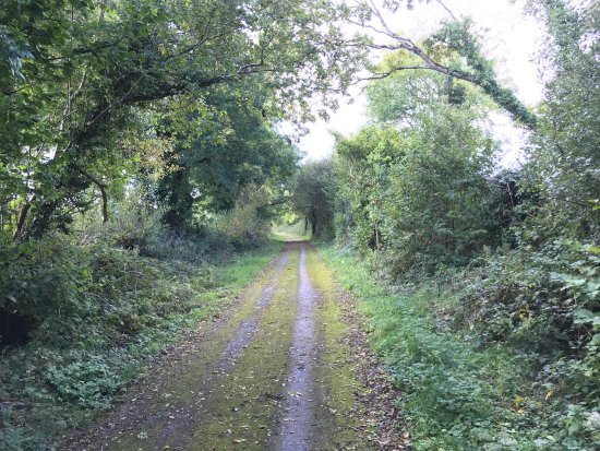 Rathkeale, Ireland: photo5.jpg