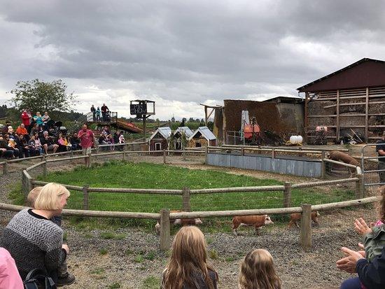Snohomish, Вашингтон: Pig Race