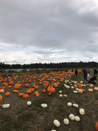 Snohomish, WA: Pumpkin Patch