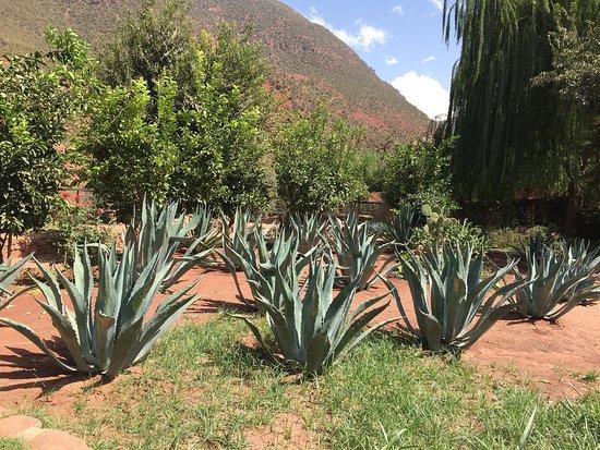 Ourika Garden: photo9.jpg