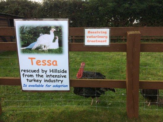 Frettenham, UK: The animal enclosures