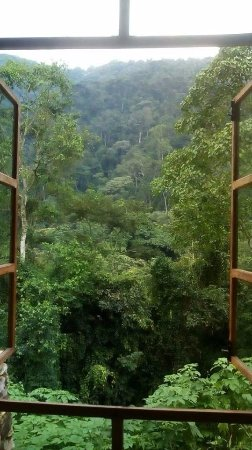 Bwindi Lodge: Virgin rainforest! Incredible view from the living room area
