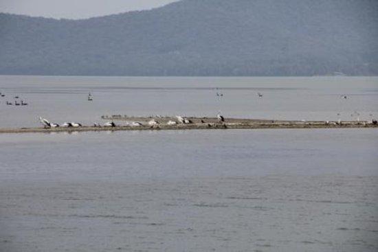 Free Spirit Cruises : Pelicans on Pelican Island