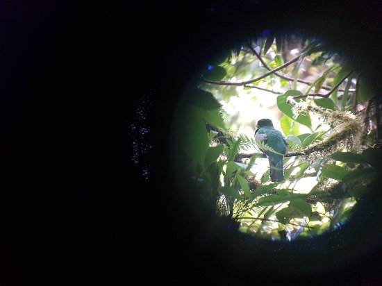 Monteverde Cloud Forest Reserve, Costa Rica: vogel door de lens
