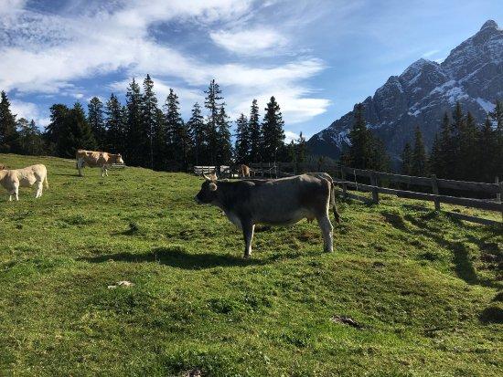 Mieders, Austria: photo5.jpg