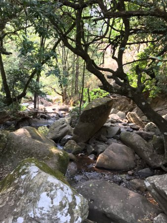 Cathedral Peak Hotel: A shady spot on the walk to Doreen Falls