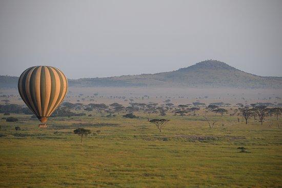 Serengeti Balloon Safaris