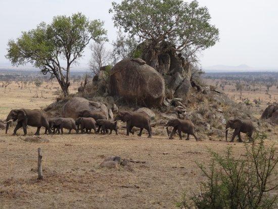 how to get to four seasons serengeti
