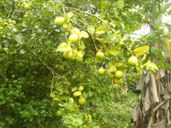 Abejar, Espanha: Arboles frutales del patio del ranchon