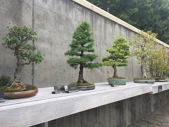 Swell Bonsai Installation Picture Of The North Carolina Arboretum Wiring 101 Carnhateforg
