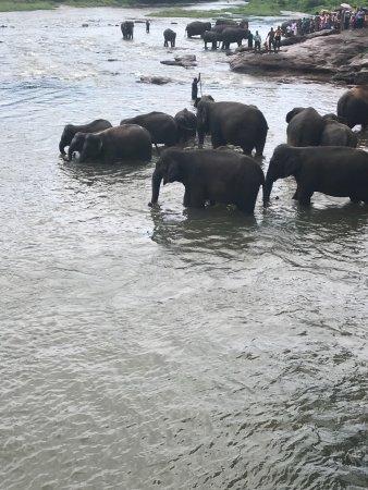 Hotel Elephant Bay: photo6.jpg