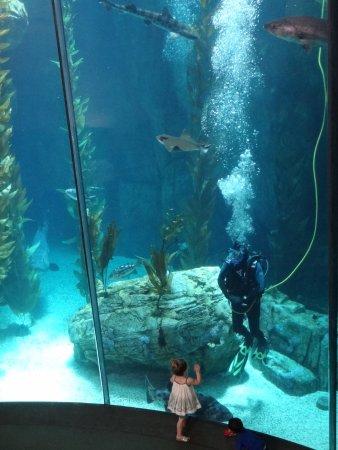 Aquarium Of The Pacific Acuario En El Hall Central