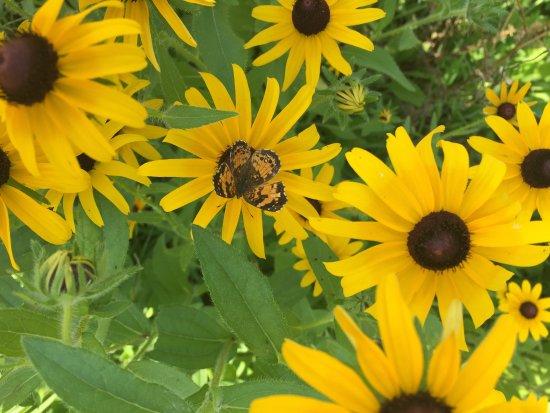 Nellysford, VA: Pollinator Garden