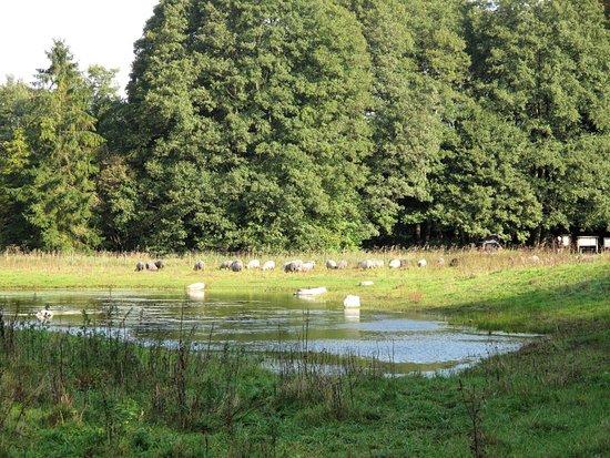 Drakamollan Naturreservat