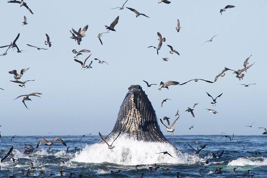 Avila Beach, Califórnia: lots of lung feeding out here in Avila!