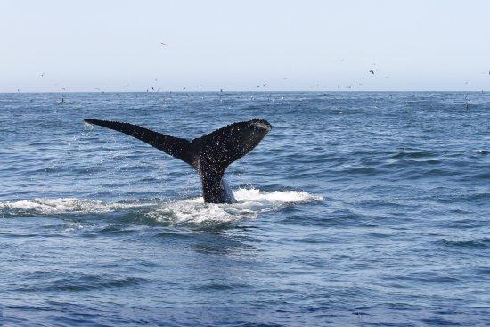 Avila Beach, Califórnia: Fluke's up!