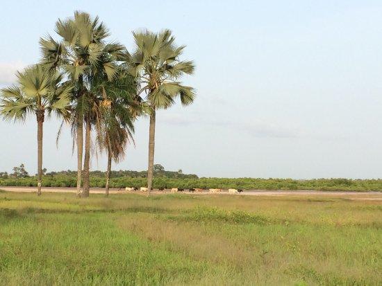 Casamance, Σενεγάλη: Ecocamp of Seleky
