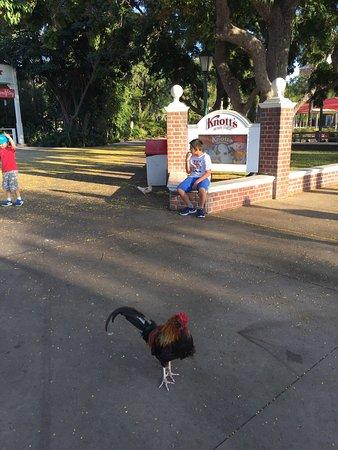 Buena Park, Kalifornia: Entrada en el estacionamiento