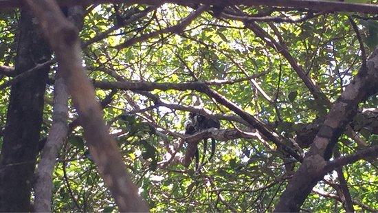 Santuario Ecologico de Pipa: photo7.jpg