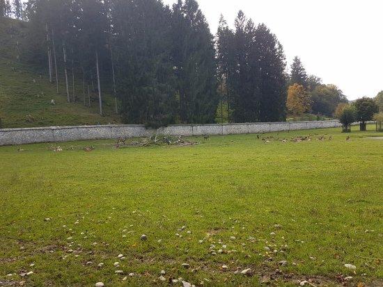 Rosegg, Austria: vadak