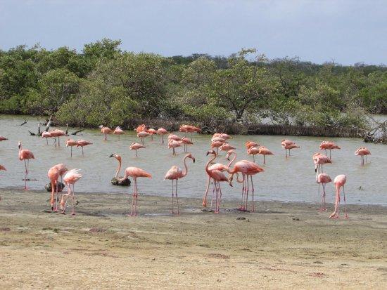 Washington-Slagbaai National Park, Bonaire: Het is er vol met flamingo's (Vooral op het einde van de rit)