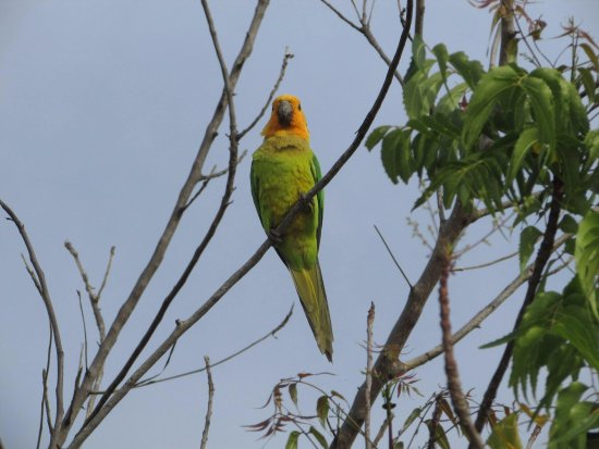 Washington-Slagbaai National Park, Μπονέρ: als je goed kijkt zie je mooie vogels