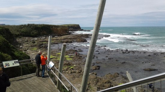 Invercargill, New Zealand: Petrified Forest - Southern Scenic Route