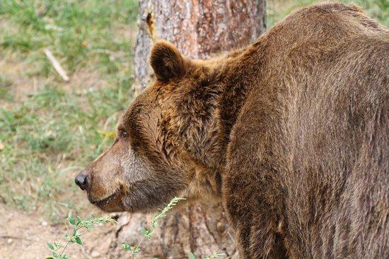 Zoo Plzeň: Black Bear