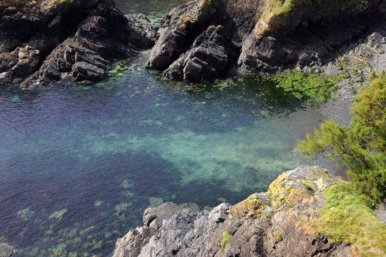 Cadgwith, UK: The water in the cove from up on the northern hill.