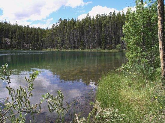 Herbert Lake : Banff NP