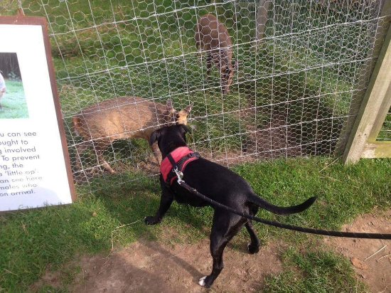 Frettenham, UK: Olive & a fawn making friends