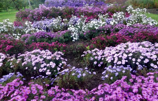 Wheatley, UK: One of flower beds