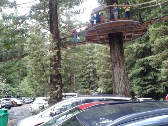 Rotorua Canopy Tours: Platform Views