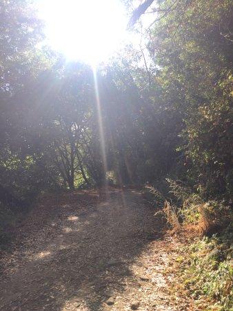 Castro Valley-billede
