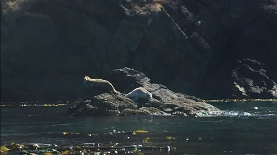 Seals Anacortes WA