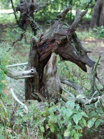 Lee, NH: wow. deer/horse/wood